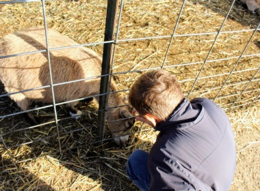 Benji trying to feed a goat:)