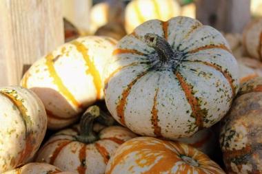 NJ Pumpkins